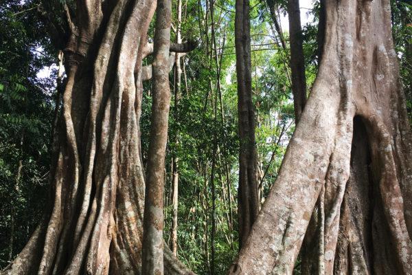 Cambodge : dans les montagnes de Mondolkiri