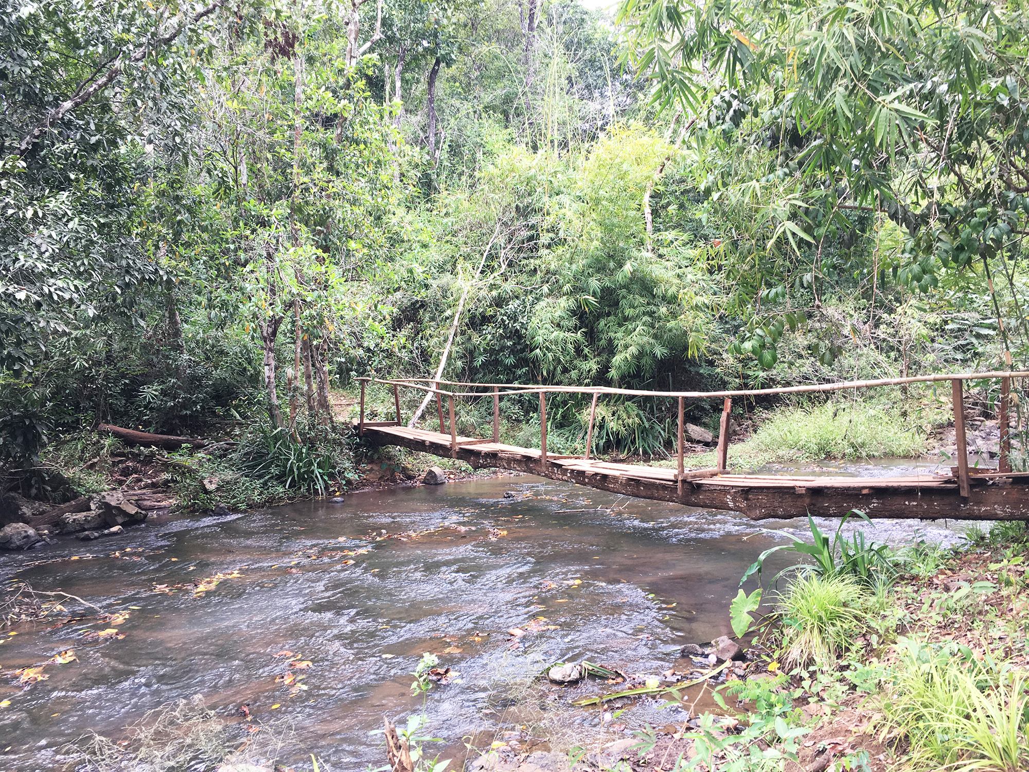 pont dans la jungle de mondolkiri